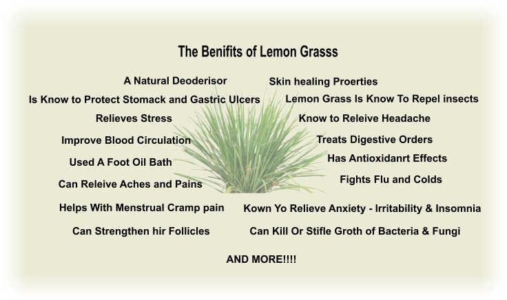 Lemon grass the essential oil